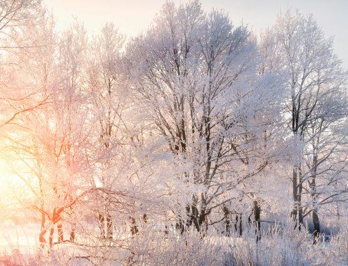 Il fascino dell'inverno: la galaverna